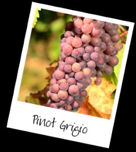 PinotGrigioGrapes