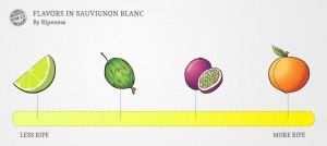 Sauvignon-blanc-taste-profile-by-ripeness